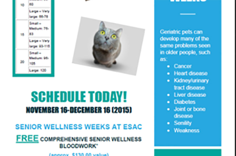 SENIOR WELLNESS WEEKS AT ESAC!