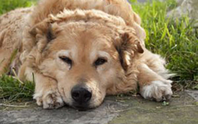 DEALING WITH OLDER DOG HEALTH PROBLEMS
