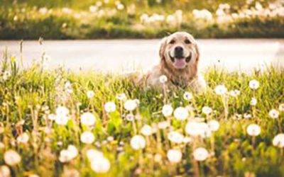 COMMON PLANTS TOXIC TO YOUR PET