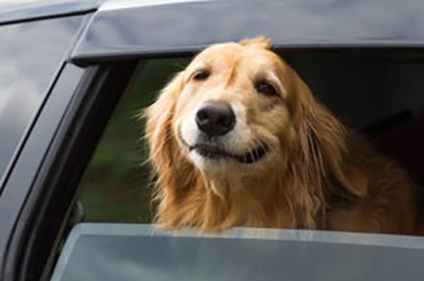 TRAVELING WITH YOUR FURRY COMPANION SOON? CONSIDER THESE USEFUL TIPS BEFORE THE TRIP!